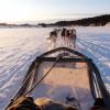 Hundeschlitten im hohen Norden