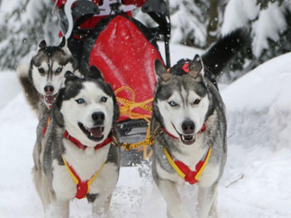 Yukon Quest - Wettkampf im ewigen Eis