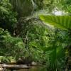 Der australische Regenwald - Ein Stück ursprüngliche Natur