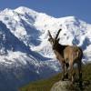 Blick auf den Mont Blanc (Chamonix)