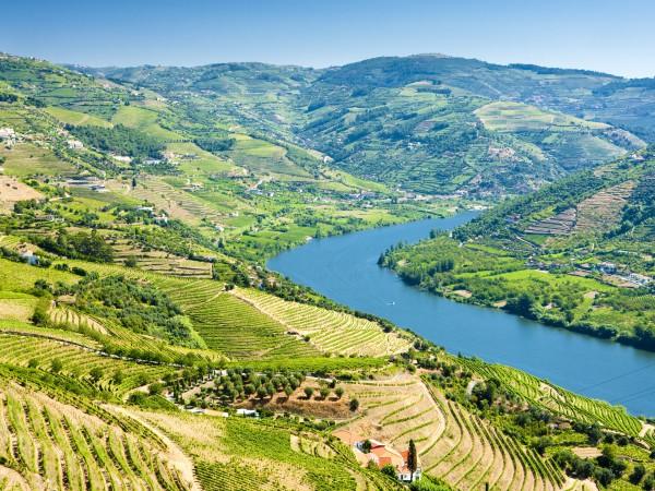Portweinanbaugebiet am Tejo, Portugal