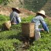 Chinesische Bauern bei der Arbeit