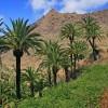 Grünende Landschaft auf Teneriffa