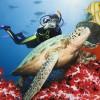 Das Rote Meer - Ein beeindruckendes Stück Natur in Ägypten